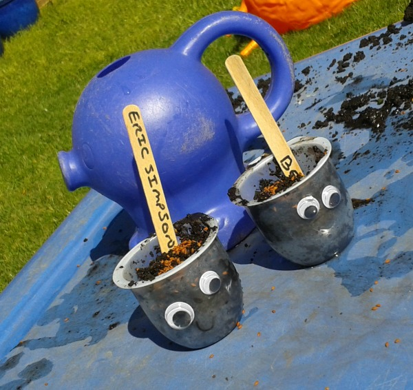 planting cress heads with kids