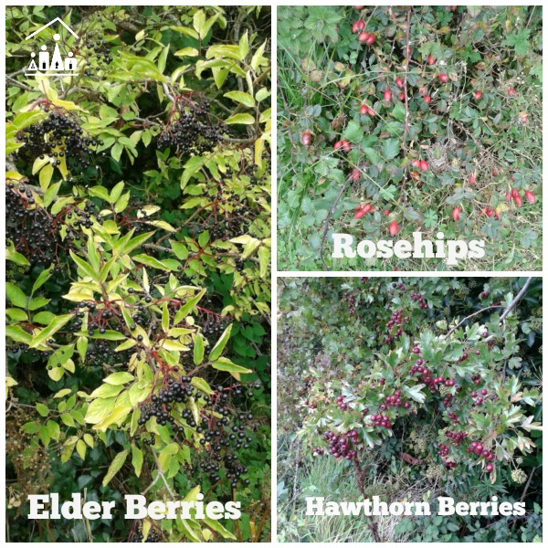 learning through adventure autumn berries