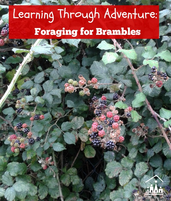 learning through adventure foraging for brambles 600