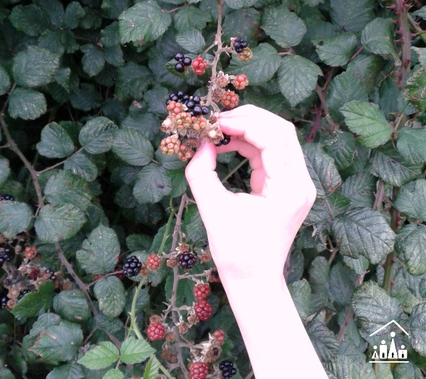 learning through adventure foraging for brambles picking