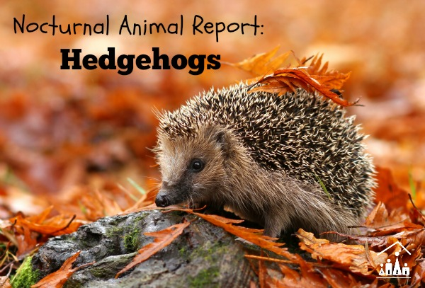 nocturnal animal report hedgehogs
