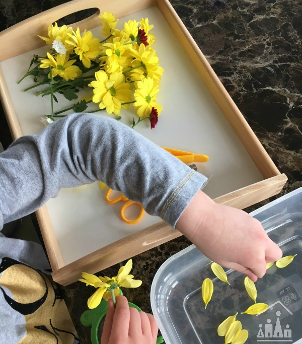 Practising Preschool Cutting Skills on Flowers