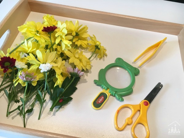 Set up for Practising Preschool Cutting Skills on Flowers