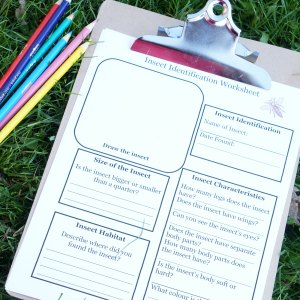 Outdoor Activities for Kids Insect Identification Worksheet