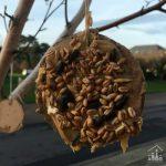 DIY Bird Seed Baubles