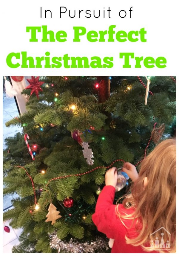 A trip to Parkmore Christmas Tree Farm