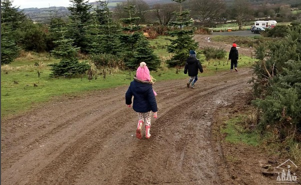 Family visit to a Christmas tree farm
